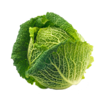 Savoy Cabbage valledoro